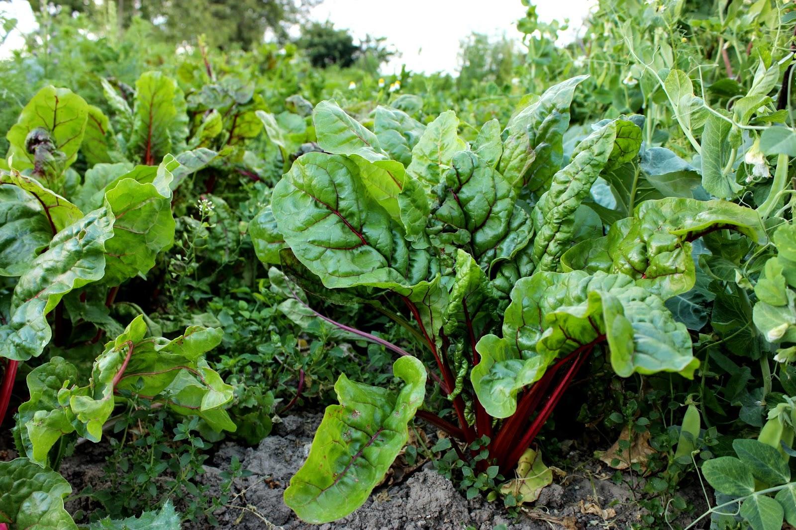 Rostliny na zahradě