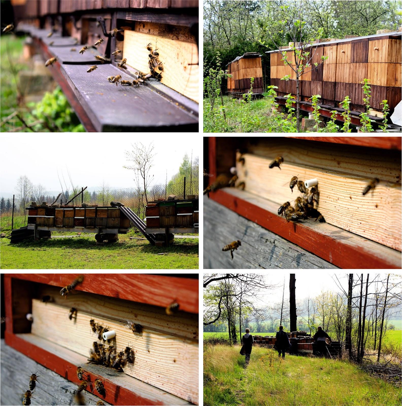 Včelí úl, zdroj medu