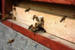 Bez včelích úlů se neobejdeme